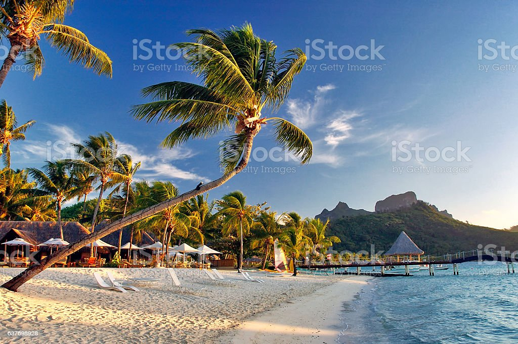 Bora Bora beach scene with palm trees, mountains at sunrise stock photo