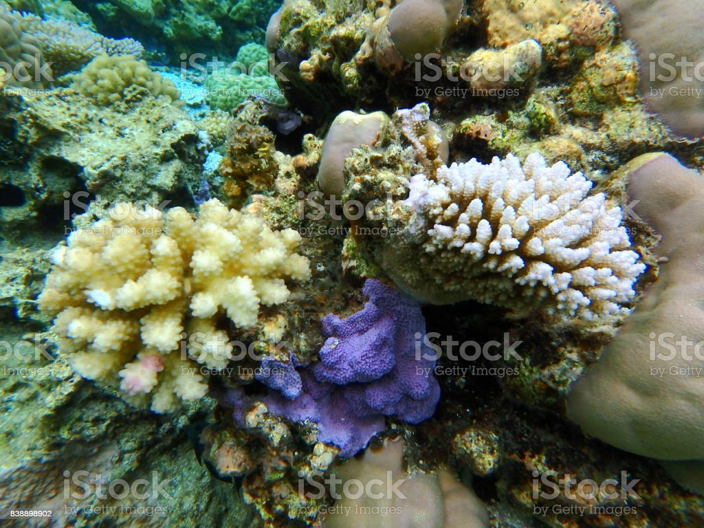 Bora Bora Lagoon coral garden stock photo