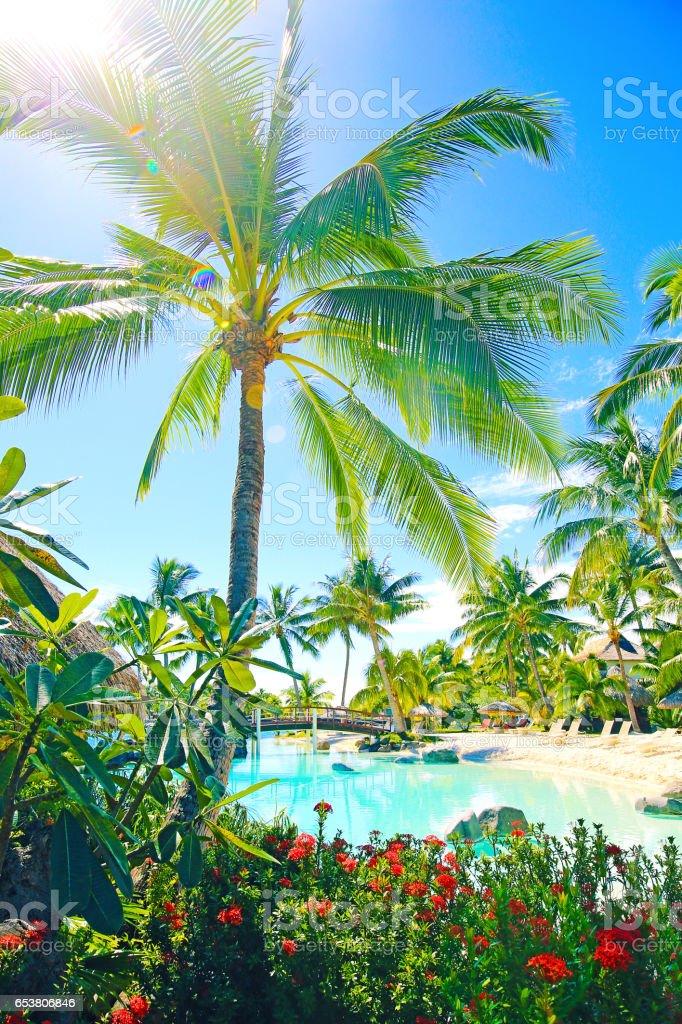 Bora Bora Palm Trees stock photo
