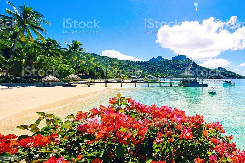Bora Bora Tahiti Flowers stock photo
