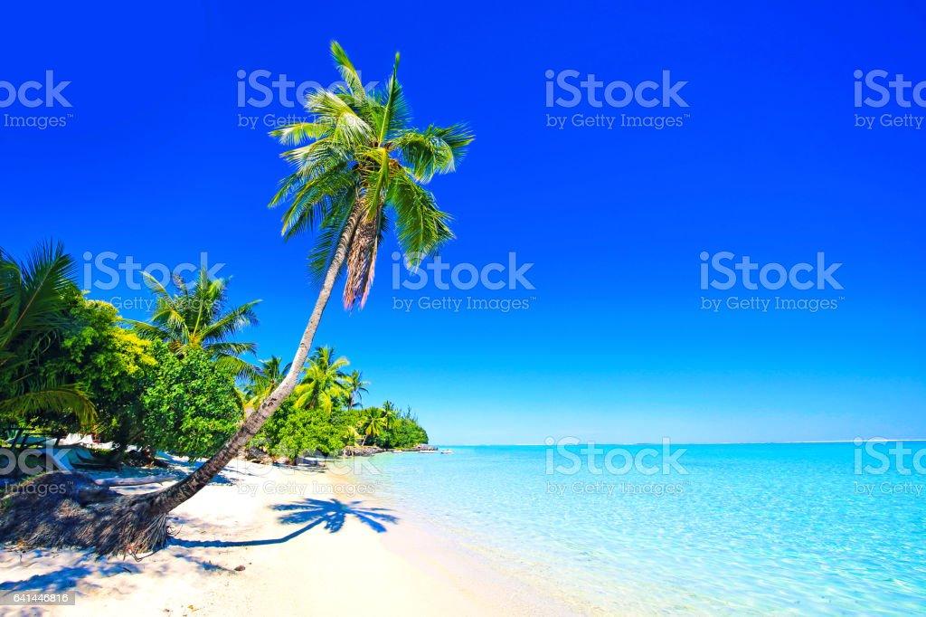 Bora Bora Tahiti palmera - foto de stock