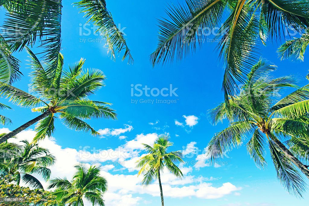 Bora Bora Tahiti Palm Trees foto royalty-free