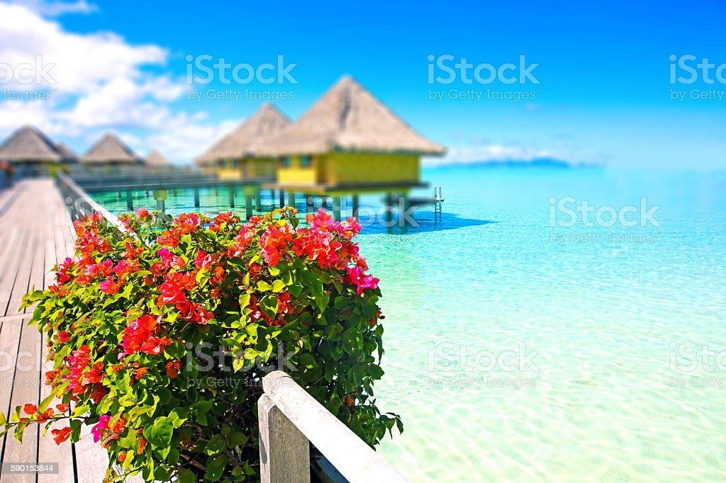 Bora Bora Tahiti Stock Photo Download Image Now