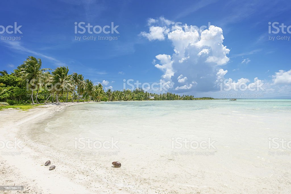 Bora-Bora Dream Beach with Coconut Palm Trees royalty-free stock photo