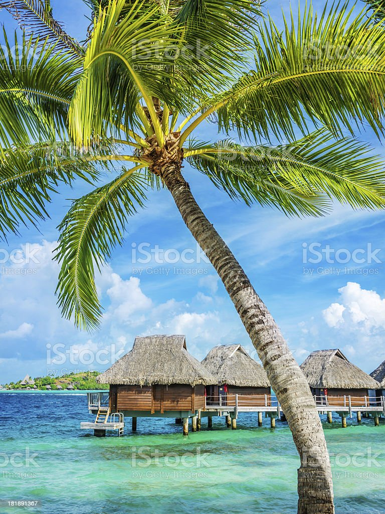 Bora-Bora Luxury Resort under Palm Trees stock photo