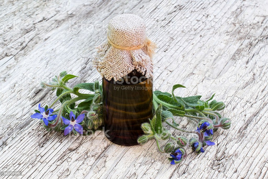 Borage (Borago officinalis) and borage oil - foto stock