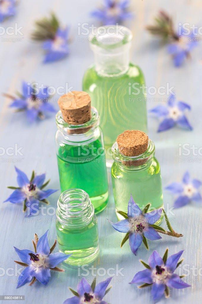 Borage edible and medicinal flower - foto stock