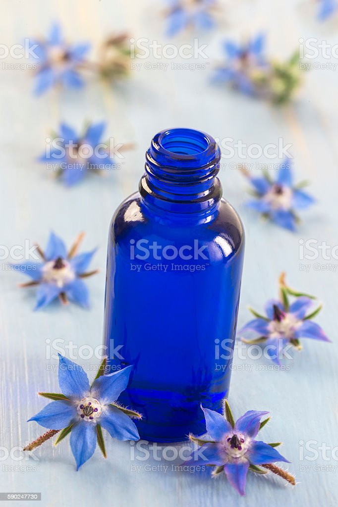 Borage edible and medicinal flower - foto stock