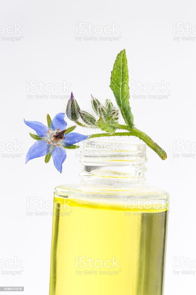 Borragine olio, Borago Officinalis - foto stock