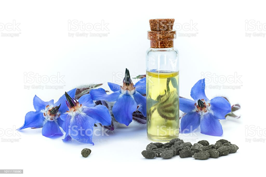 Borage oil (Borago officinalis); flowers and seeds on white background - foto stock