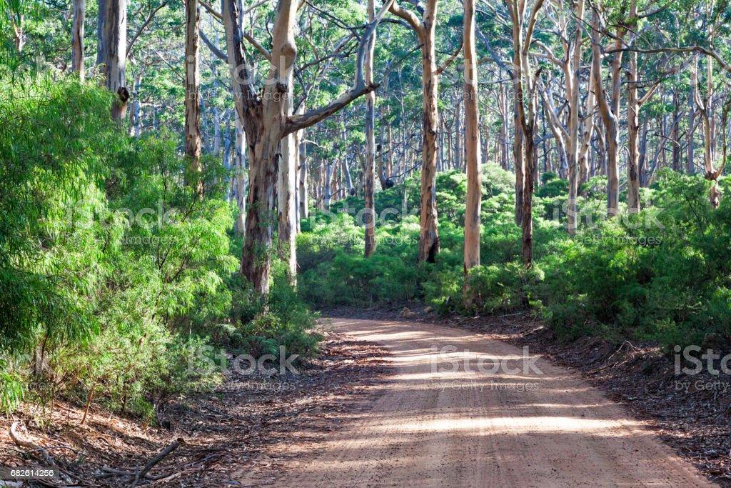 Boranup Kauri forest stock photo