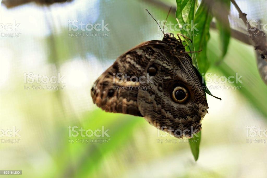 Borboleta-coruja na folha da planta stock photo