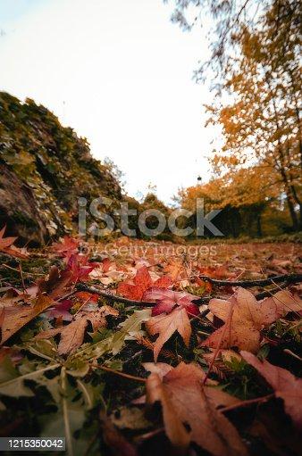 924487256 istock photo Bordeaux, France, Europe. 1215350042