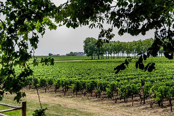 Bordeaux vineyard stock photo