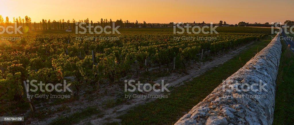 Bordeaux Vineyard-Medoc-France royalty-free stock photo