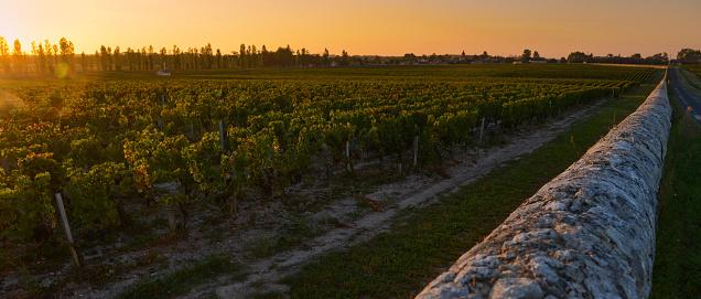 Bordeaux Vineyardmedocfrance Stock Photo - Download Image Now