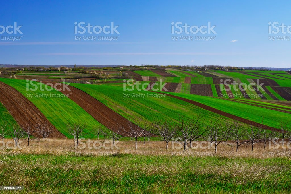 Border between a green and a brown fields royalty-free stock photo