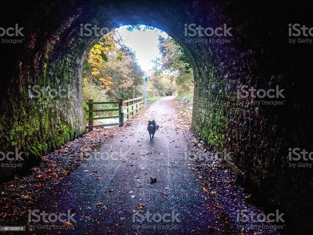 Border collie dog in tunnel on cycle footpath photo libre de droits