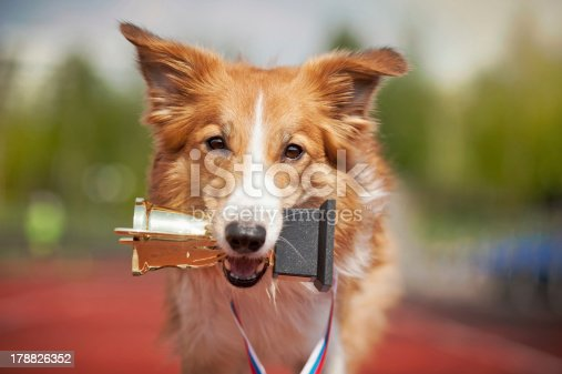 istock Border collie dog on a track with a trophy 178826352
