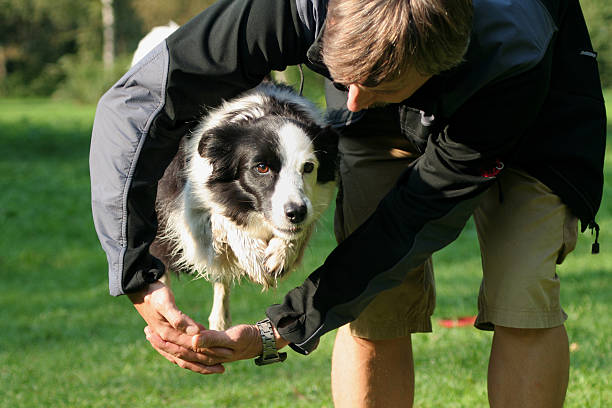 Border collie jumping through the arms picture id174896398?b=1&k=6&m=174896398&s=612x612&w=0&h=vupbi9smo9nsd0jogb1wuuqfdtc r2vjcsno30  xug=