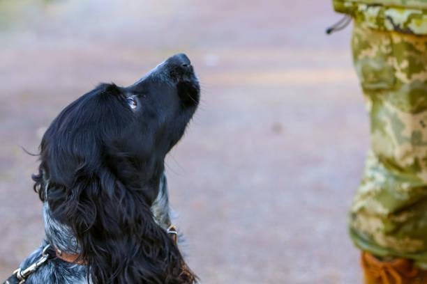 Grenzhund mit einem Soldaten – Foto