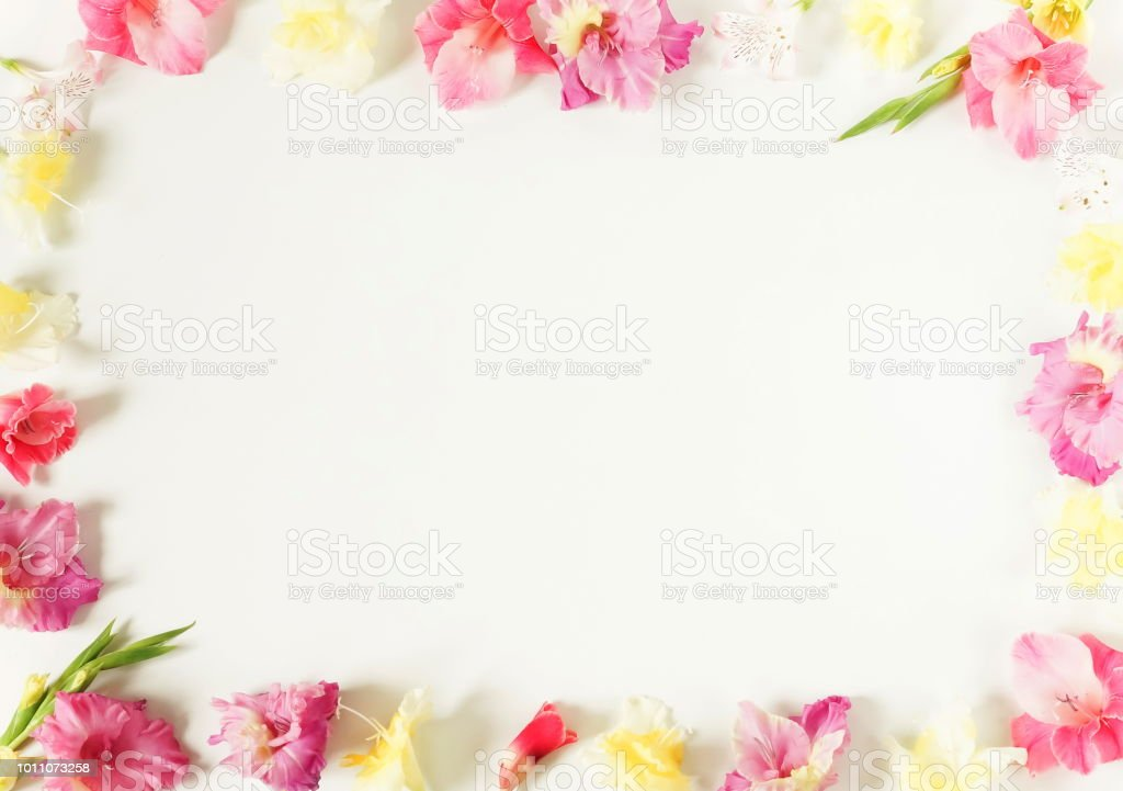 border frame made of pink and yellow gladioluses on white