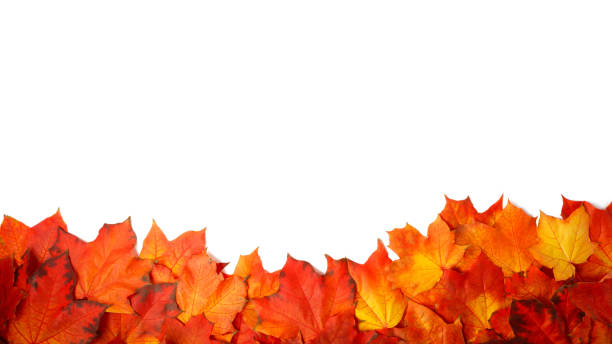 border frame of colorful autumn leaves isolated on white border frame of colorful autumn leaves isolated on white autumn leaf color stock pictures, royalty-free photos & images