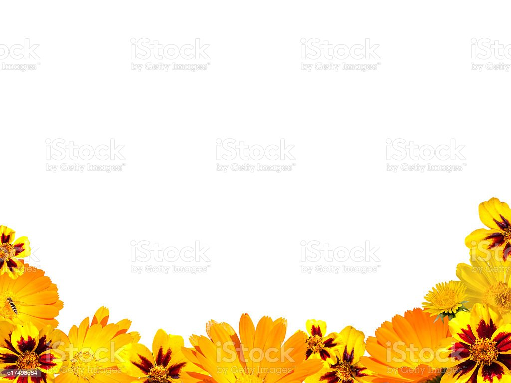 border from yellow flowers on a white background isolated stock photo download image now istock https www istockphoto com photo border from yellow flowers on a white background isolated gm517498584 89513713