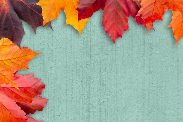 Grenze der Herbstblätter auf einem grün strukturierten Hintergrund - eine schöne Vorlage für eine Herbstkarte oder Glückwünsche – Foto