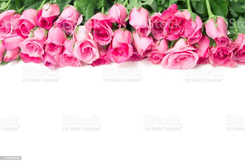 Photo Libre De Droit De Frontière De Belle Douce Douce Rose