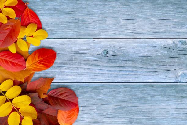 Grenze der coloful Herbstblätter auf blauem Holzhintergrund - eine schöne Vorlage für eine Herbstkarte oder Glückwünsche – Foto