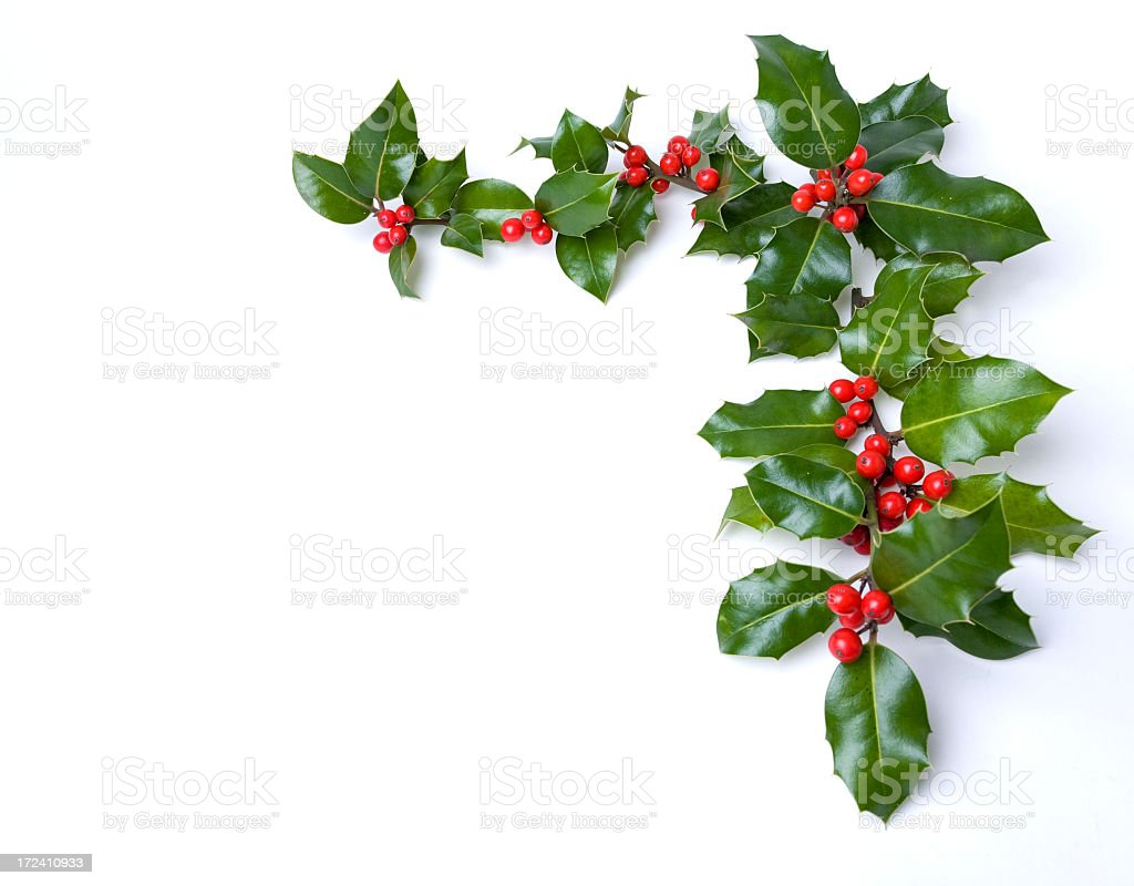 Border of fake holly on white stock photo more pictures for Holl image