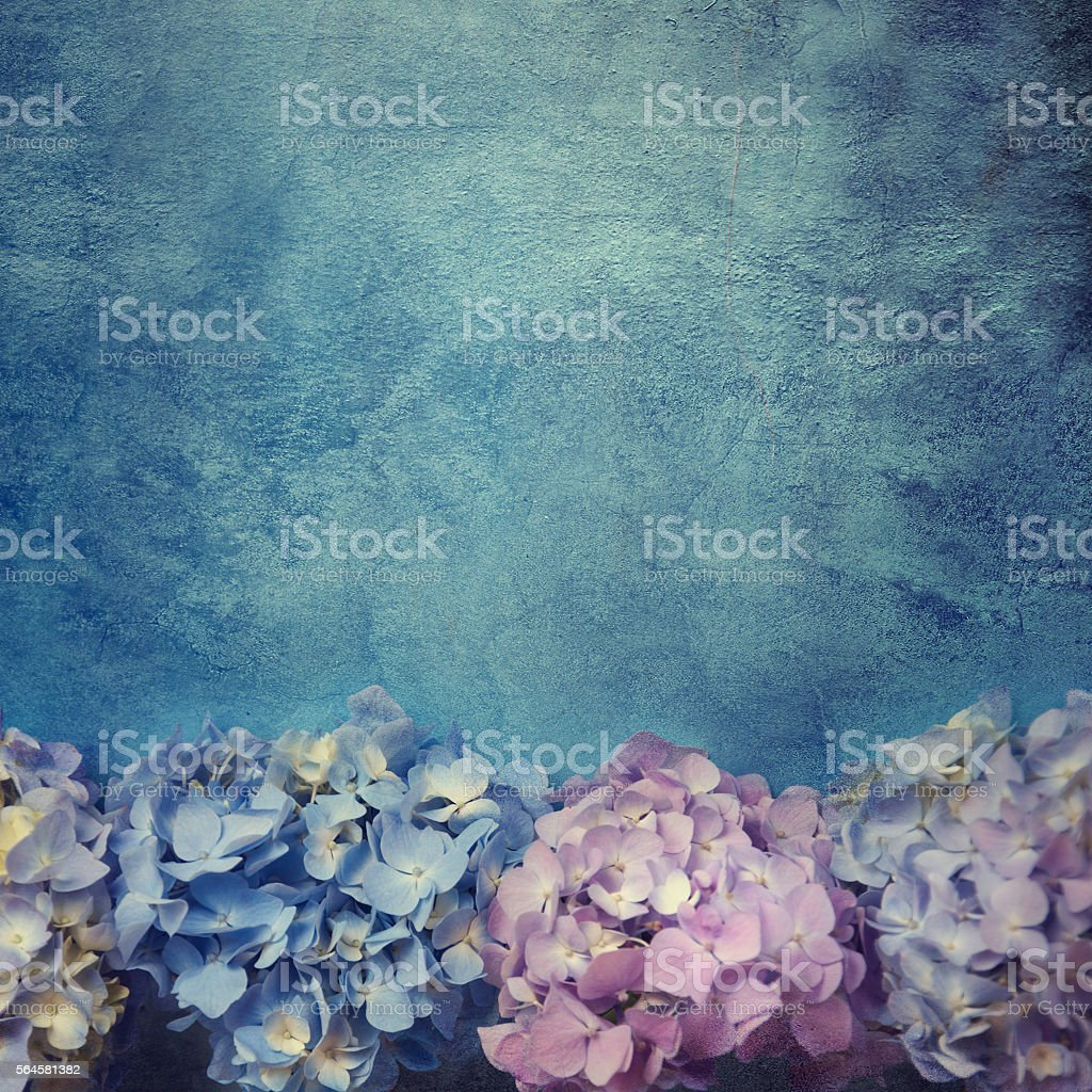 Border of hydrandea flowers. stock photo