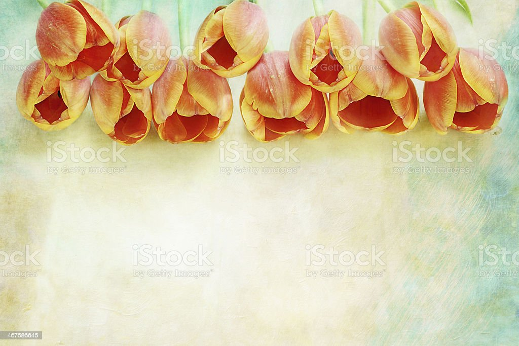 Border of Orange Tulips stock photo