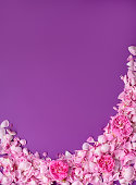 istock Border of pastel pink petals on violet background. Floral background. Valentine's background. Valentines Day and Mother Day background. 1159674494