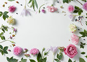 border of pink and white roses with green leaves on white background