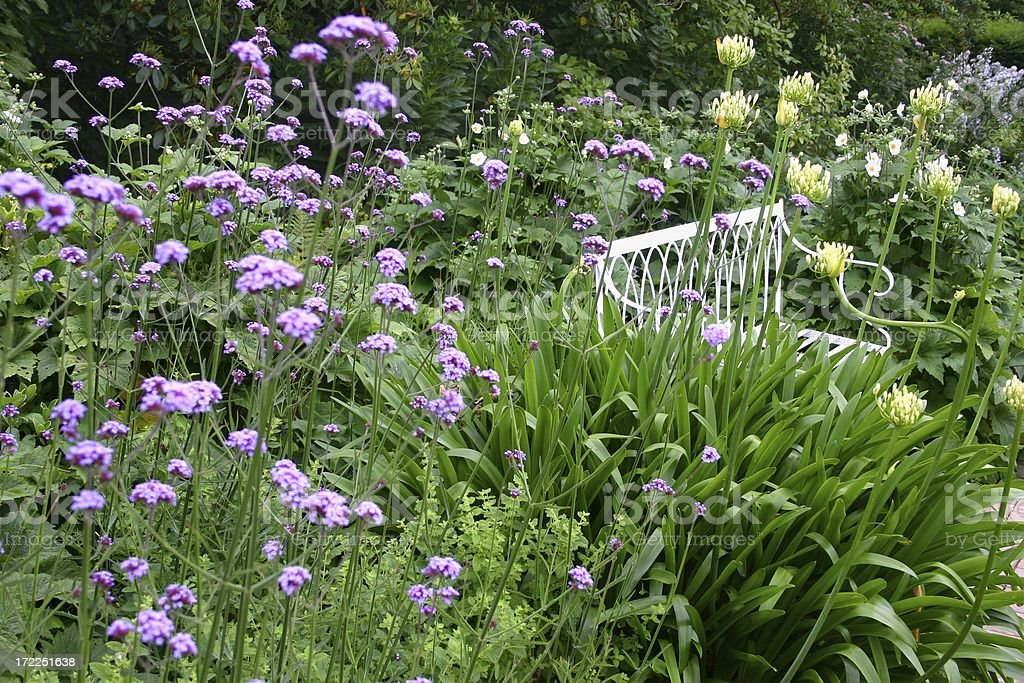 Border Plants At An English Cottage Garden Royalty Free Stock Photo