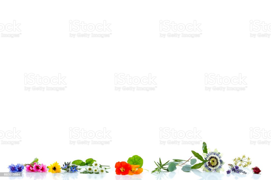 Border with herbs and fresh medicinal plants on old white bacground Preparing medicinal plants for phytotherapyand health beauty stock photo