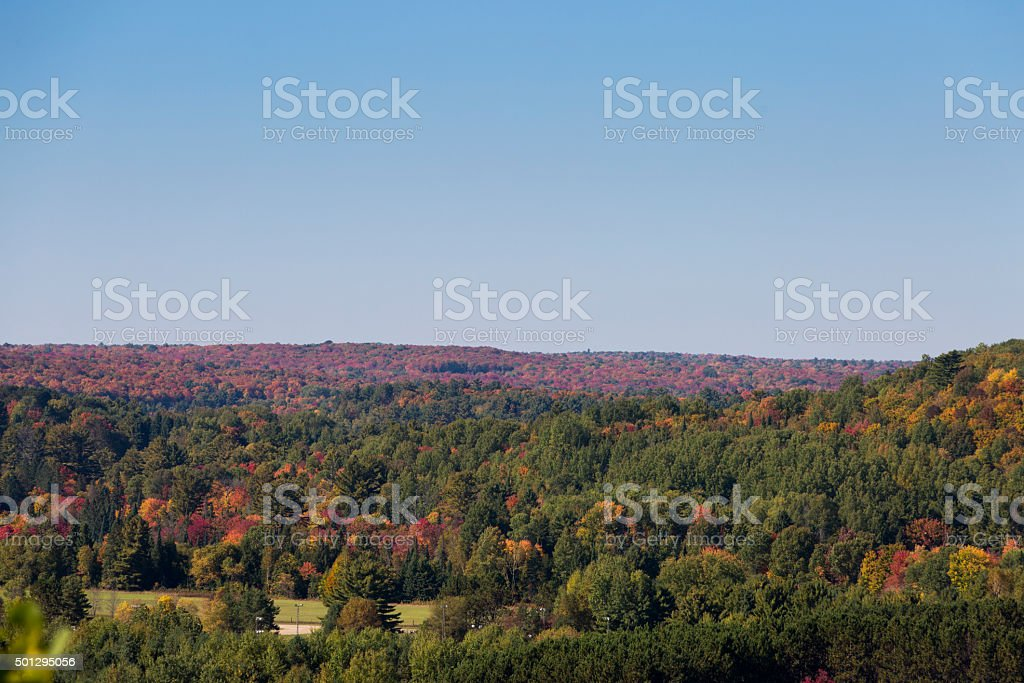 boreal forest stock photo