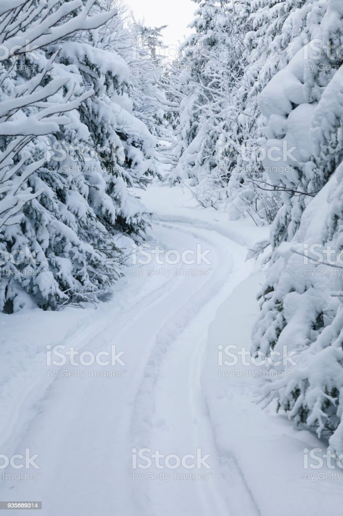 Boreal Forest Winter Scenes With Fresh Fallen Snow Stock
