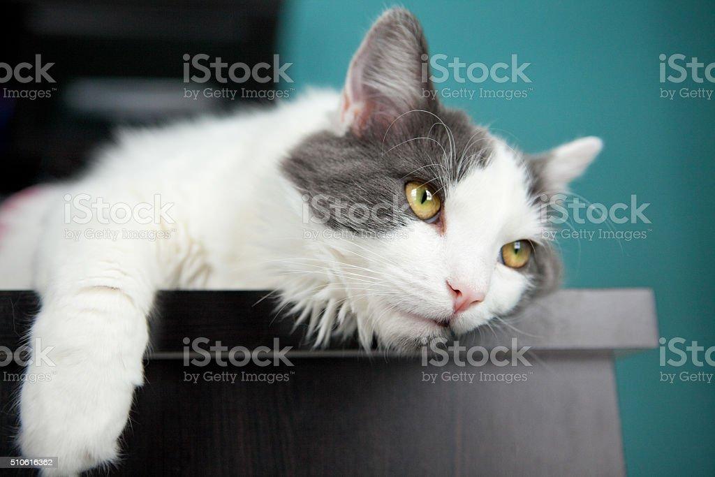 Gelangweilt Katze Aufhängen am Rand der Rezeption – Foto