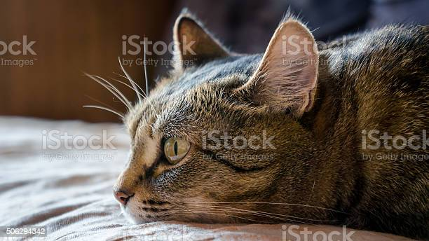 Bored cat picture id506294342?b=1&k=6&m=506294342&s=612x612&h=zdst  waubjq6aeddily42mkx79fstigof3dywdj na=