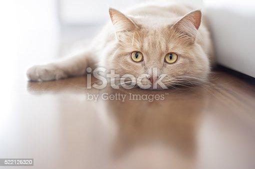 istock Bored cat 522126320