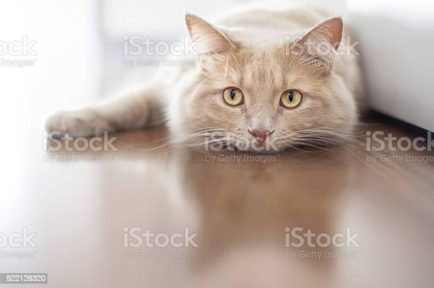 Bored cat picture id522126320?b=1&k=6&m=522126320&s=612x612&h=9xgehc92nkit oipi7uiodwuoi25eoljgexyrsrsuc0=