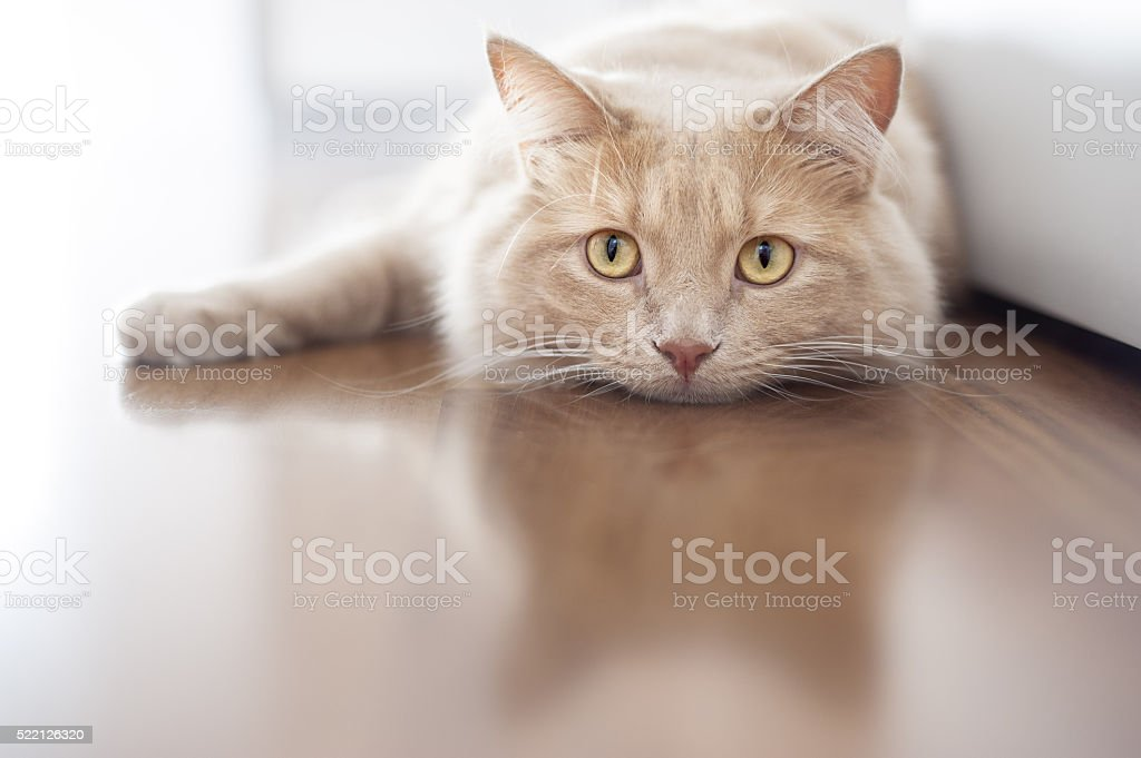 Bored cat stock photo