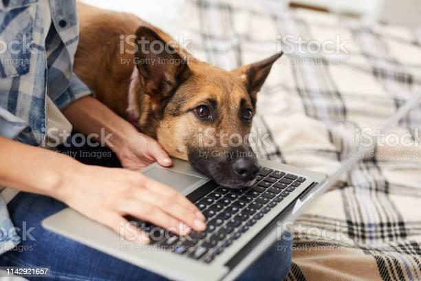 Bored dog waiting for owner picture id1142921657?b=1&k=6&m=1142921657&s=612x612&h=p2hd1av8hrrdcrhox vznbs7cqz72cdhojndthbjthq=