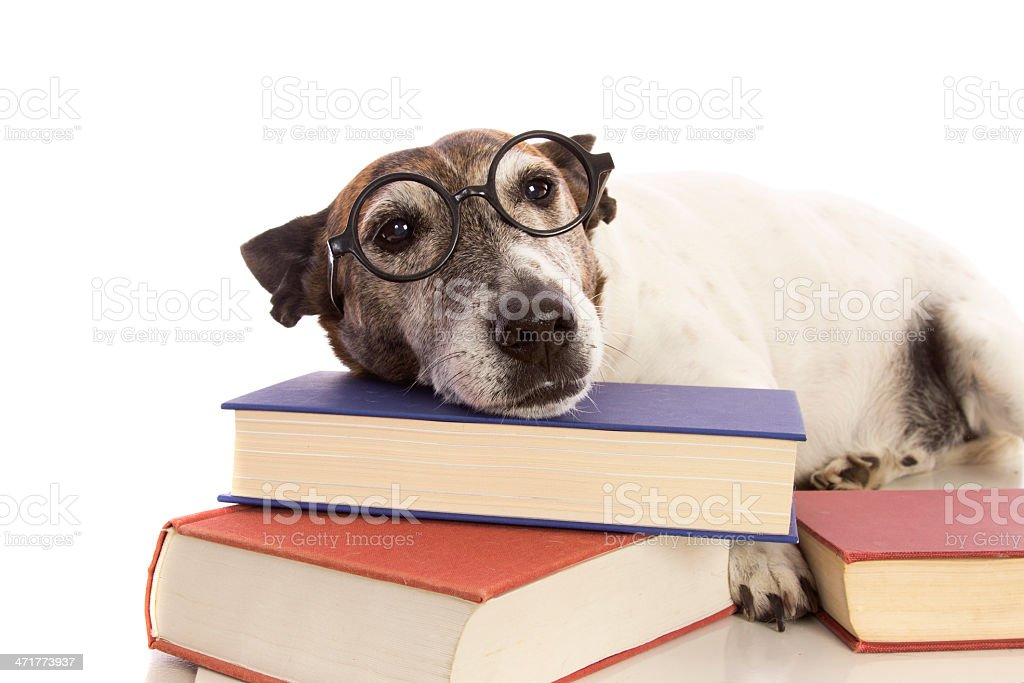 Bored Doggy Student stock photo