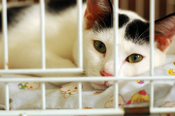 Bored Kitty In Cage stock photo
