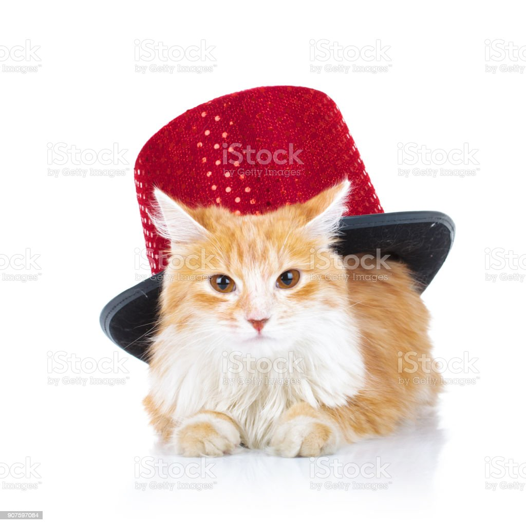 bored orange cat with a red hat stock photo