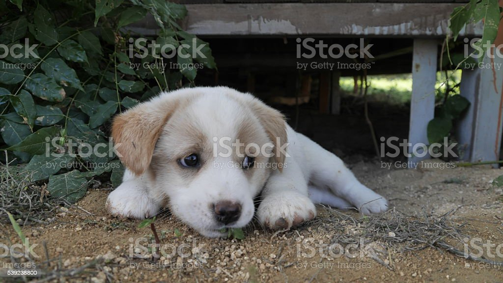 bored puppy royalty-free stock photo